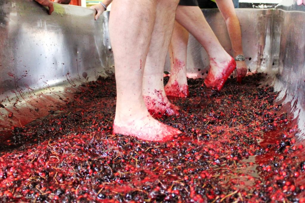 Head brewer Roger Ryman gets his feet dirty to crush the cherries