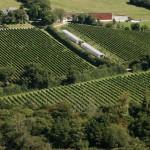 vineyardfromhill6