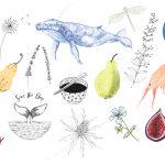 Whittle-Design-Studio-Illustrations