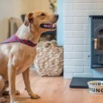 Dog Friendly Retreats – holidays with dogs