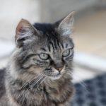 cat-2610494_1280